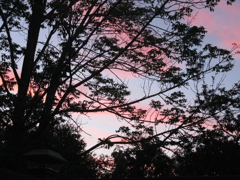 Пастельный заход солнца за густолиственными ветвями дерева стоковое изображение