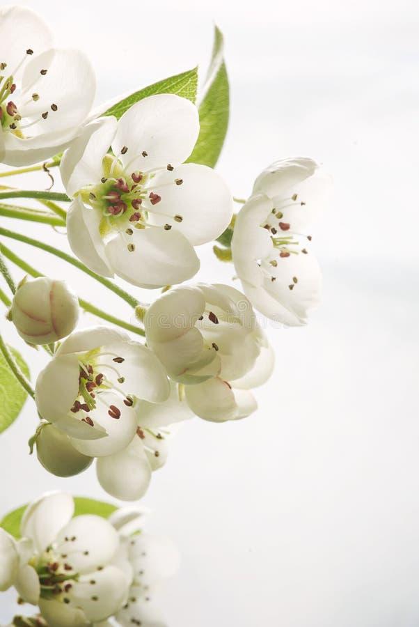 Download Пастельное цветение весны тонов Стоковое Фото - изображение насчитывающей макрос, лепесток: 37927794