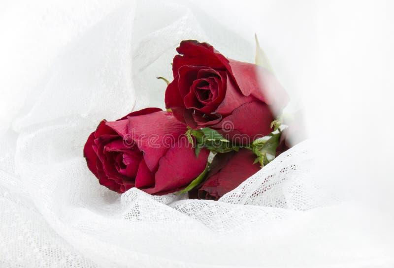 Пастельные розы стоковое изображение rf