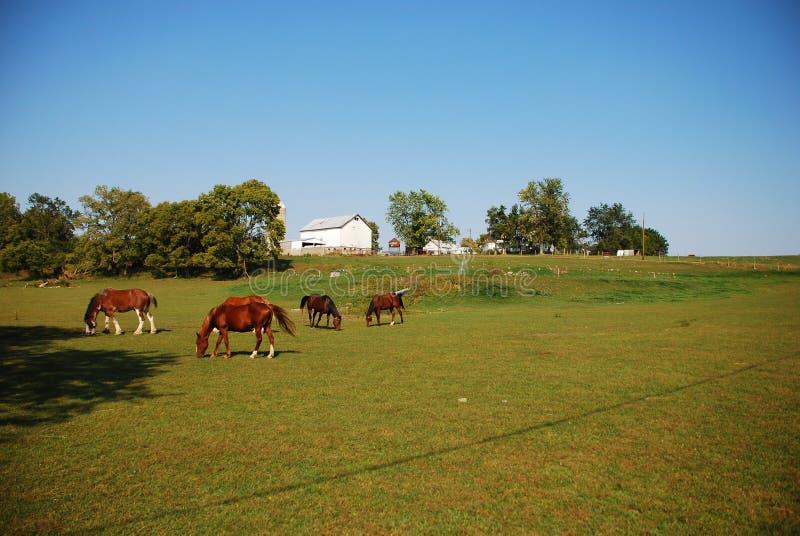 пасти лошадей стоковые изображения