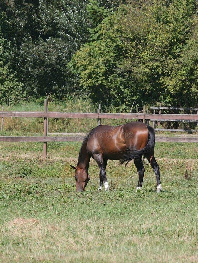 пасти лошадь стоковая фотография