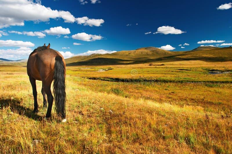 пасти лошадь