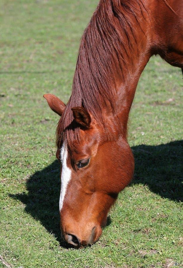 Download пасти лошадь стоковое фото. изображение насчитывающей грива - 90614