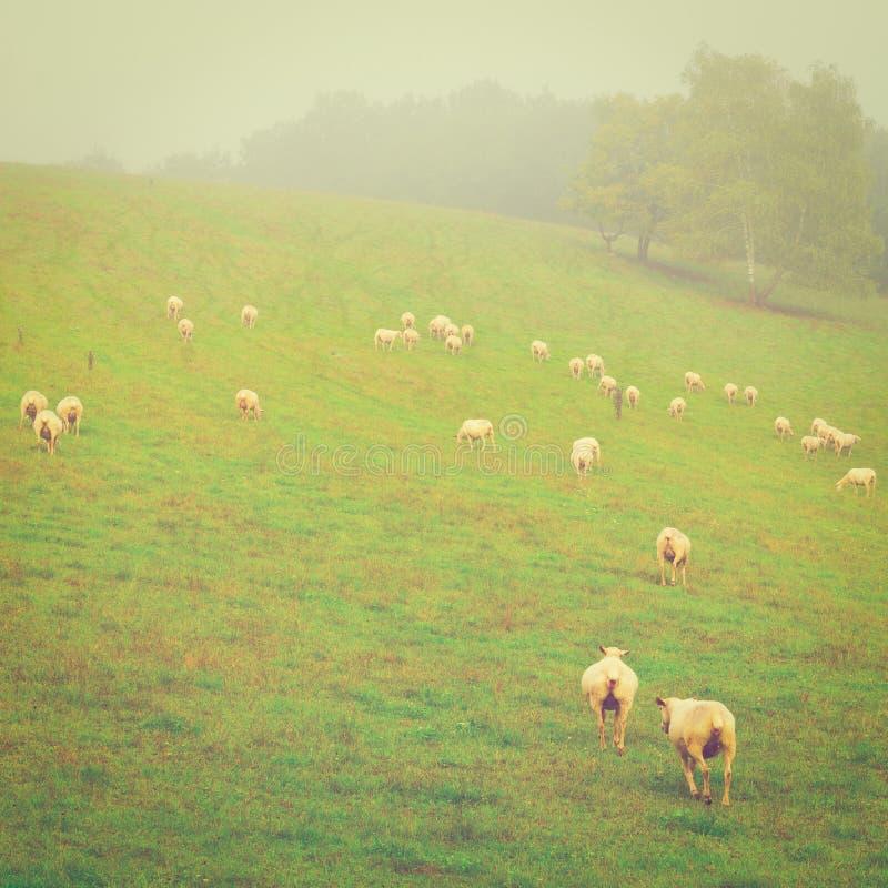 Download Пасти овец стоковое изображение. изображение насчитывающей поле - 41654853