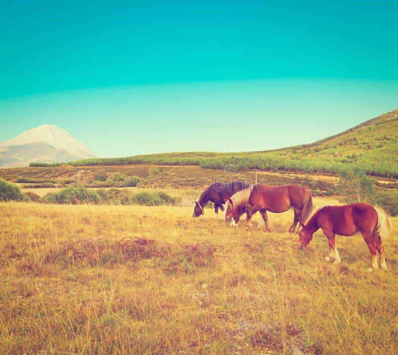 Download пасти лошадей стоковое изображение. изображение насчитывающей еда - 41655049