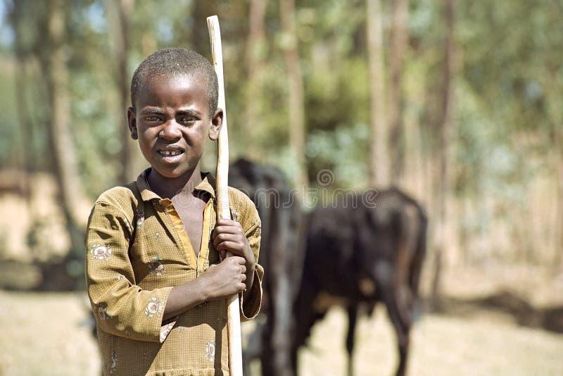 Пастух ребенка с скотинами в поисках питания стоковое изображение
