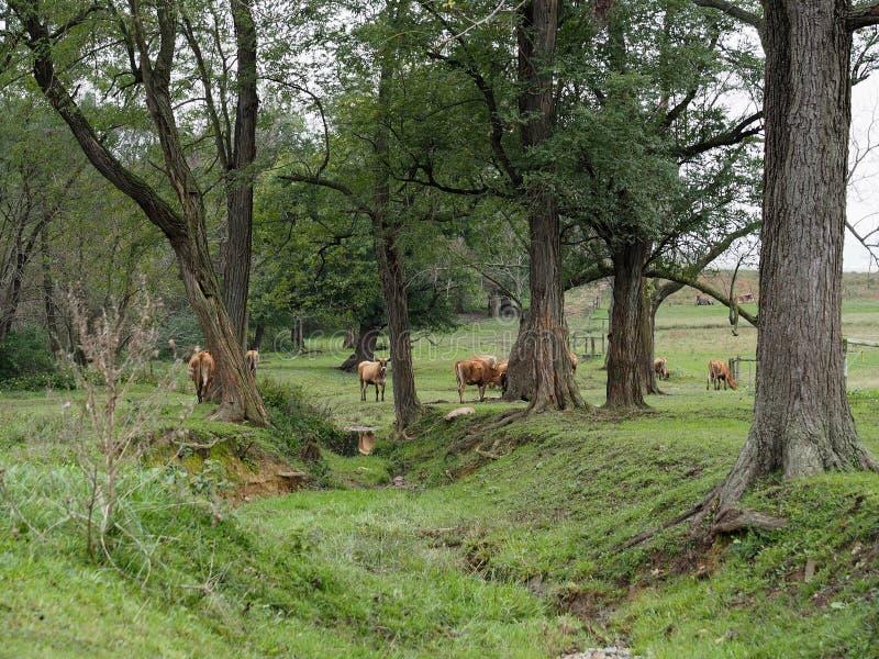 Пастырская сельская местность Пенсильвании в Lancaster County стоковые изображения