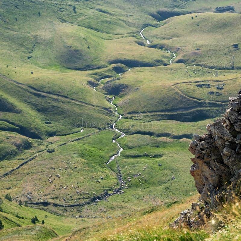 Пастырская сцена с обматывая потоком в парке Prokletije, Montenegr стоковое изображение rf