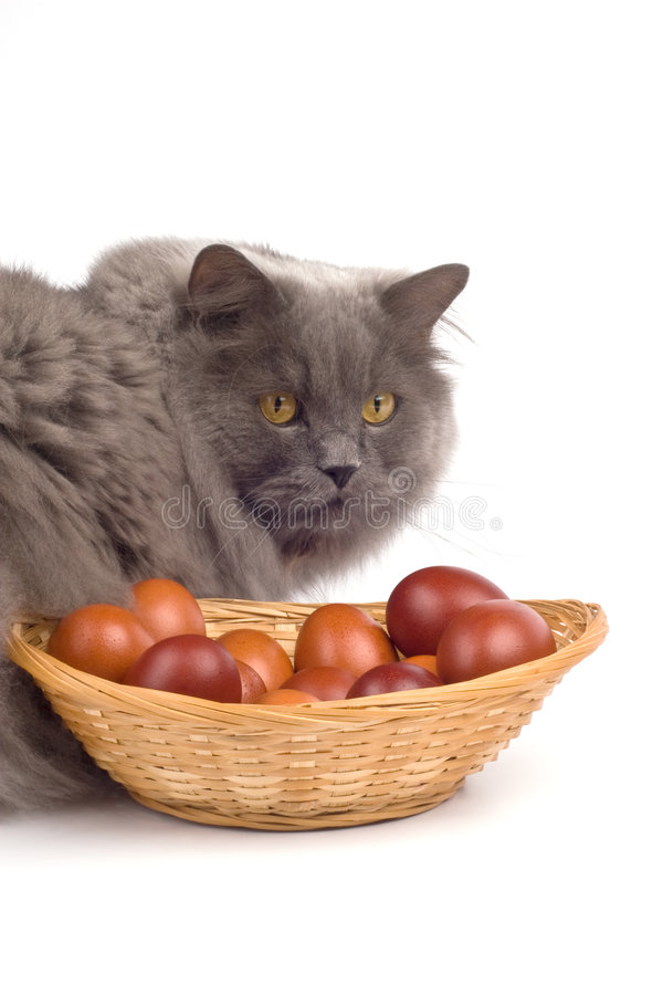 пасхальные яйца кота стоковое фото
