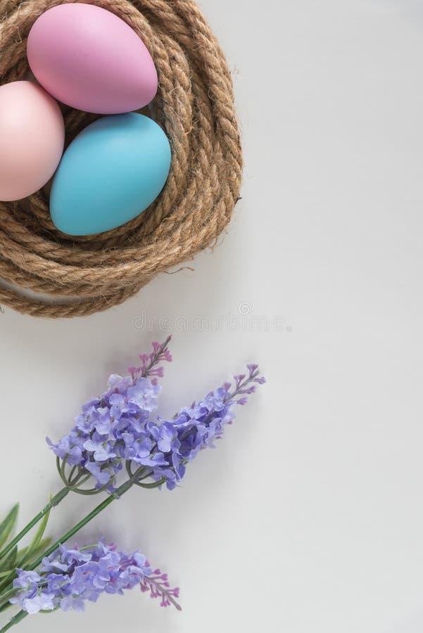 Пасхальные яйца пинка, пурпурных и голубых в гнезде с цветками лаванды стоковые фото