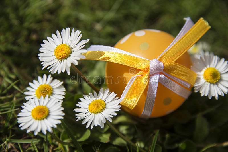 Пасхальное яйцо и маргаритки стоковые изображения rf