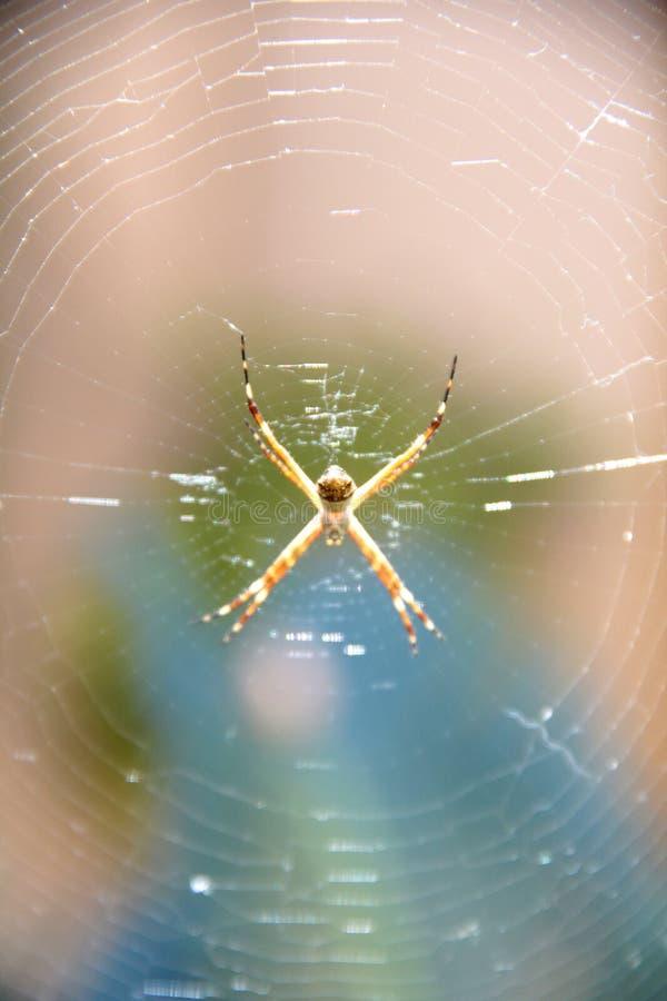 Паук в своей сети стоковые фотографии rf