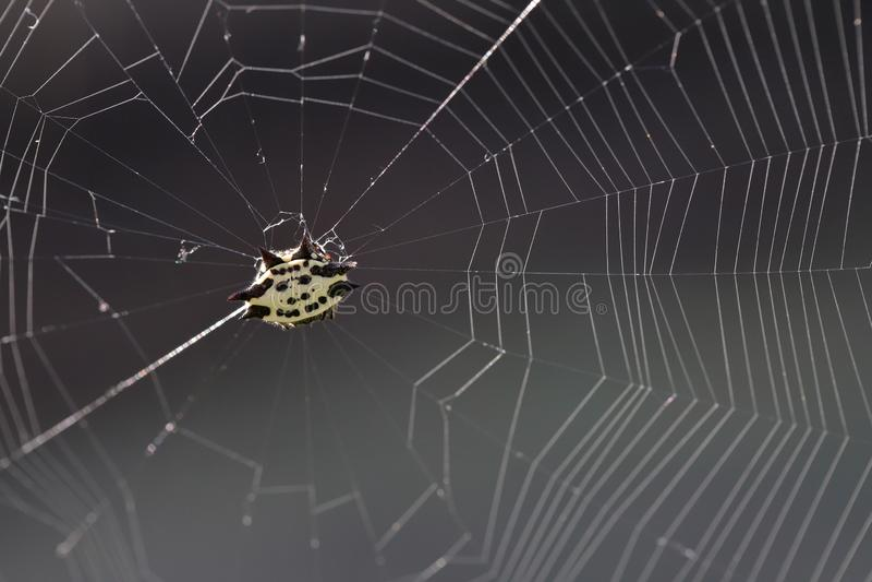 Паук в сети, против солнечного света стоковые изображения rf