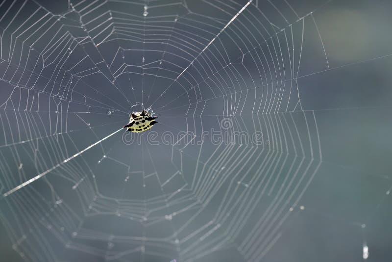 Паук в сети, против солнечного света стоковое изображение