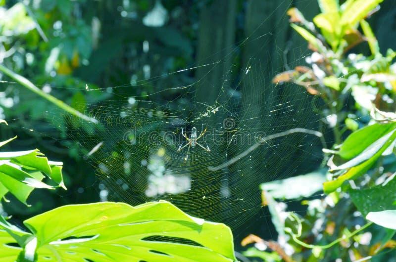 Паук в сплетенной сети в саде Джеймс стоковая фотография