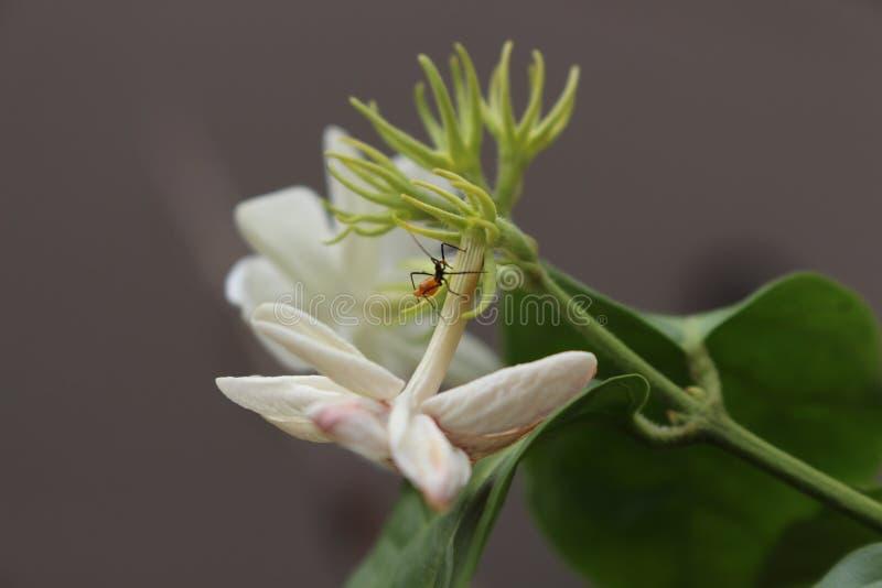 Паук в цветке стоковое фото rf