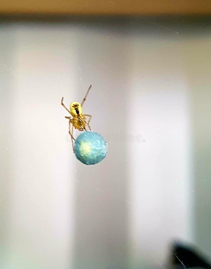 Паук и шарик стоковое изображение rf