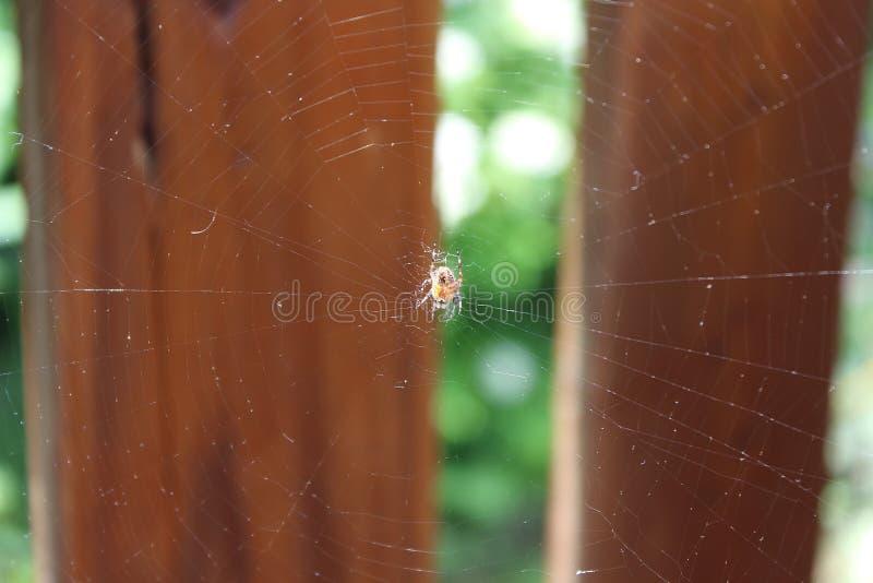 Паук клоня к ее сети стоковые фото