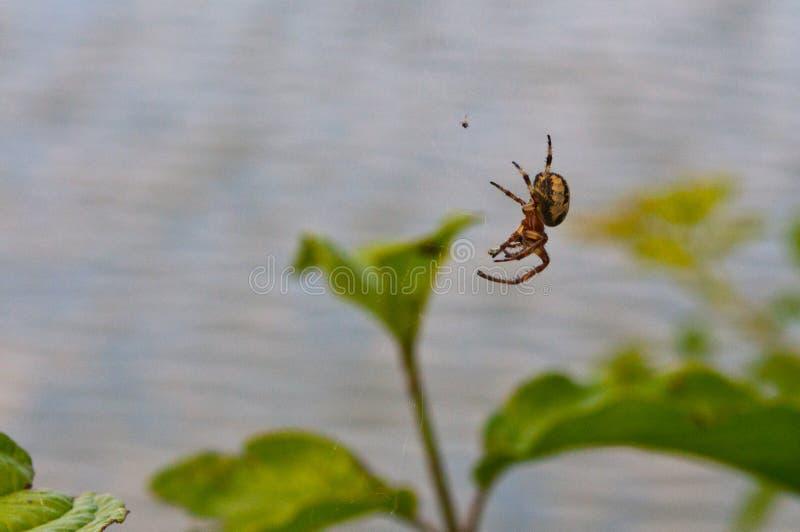 Паук, насекомые, мир насекомых, природа, одичалая природа, стоковые фотографии rf