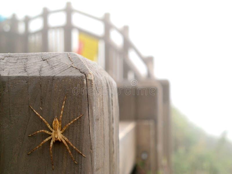 Паук на деревянных перилах стоковое фото rf