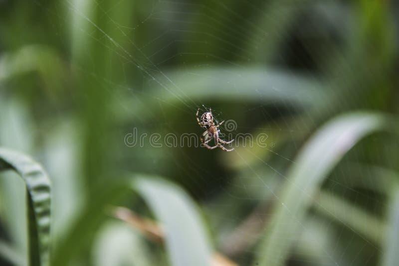 Паук на конце-вверх сети против предпосылки природы стоковые изображения rf