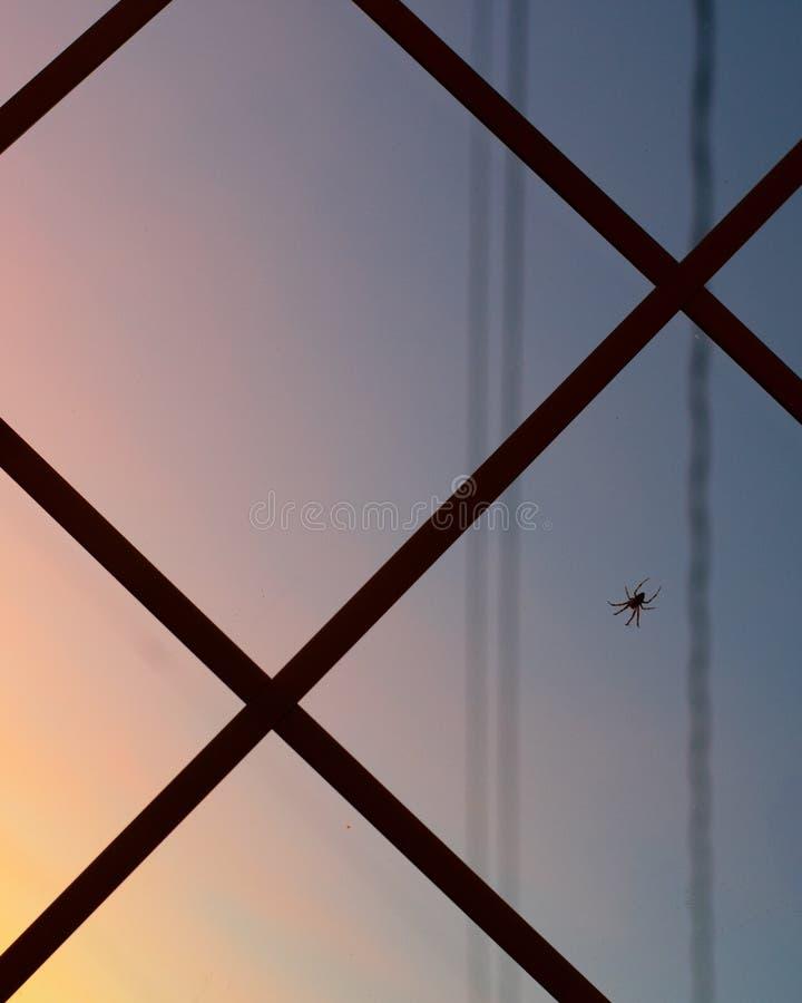 Паук на окне стоковое фото