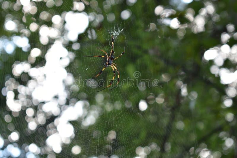 Паук на парке штата загиба Brazos стоковое фото