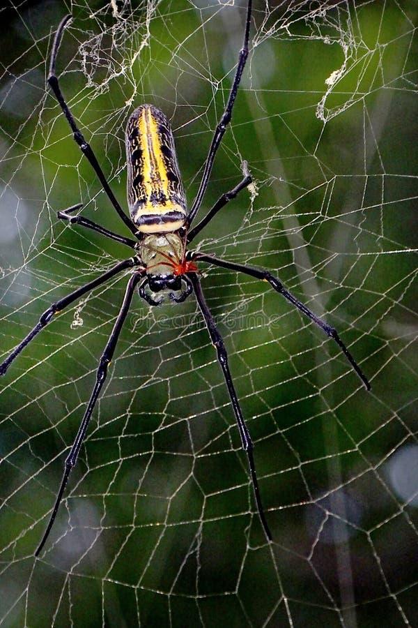 Паук на пауке стоковая фотография