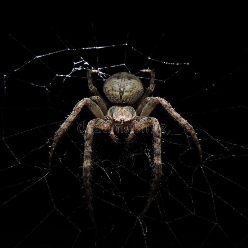 Паук на сети с черной предпосылкой стоковое изображение
