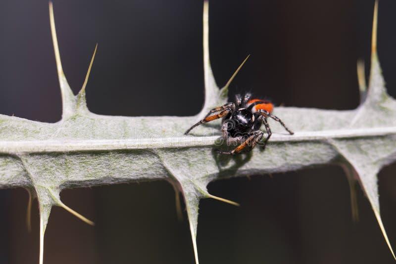 Паук на терновой ветви стоковое изображение