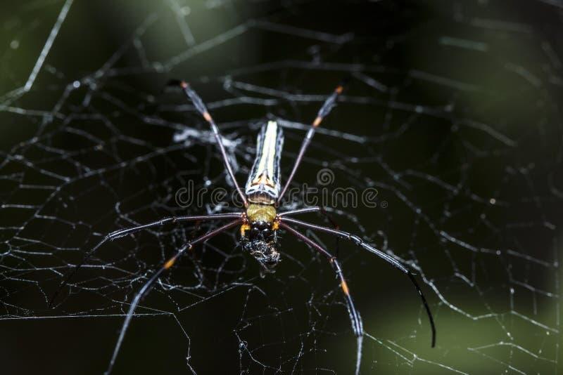 Паук охотится жертвы на паутине стоковое фото