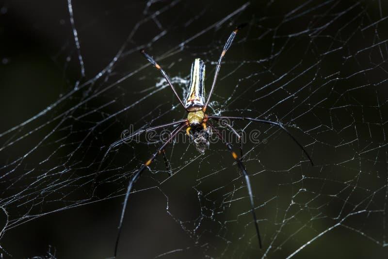 Паук охотится жертвы на паутине стоковые фото