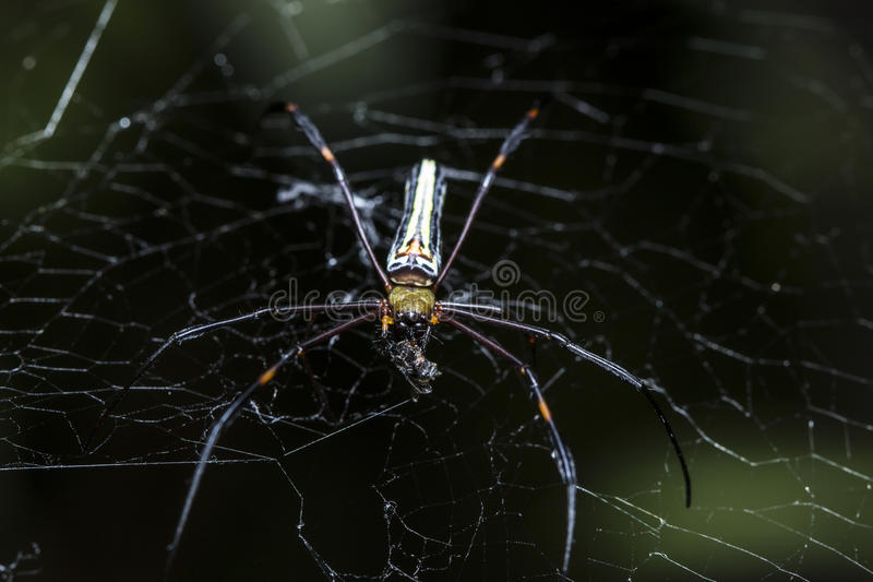 Паук охотится жертвы на паутине стоковое изображение