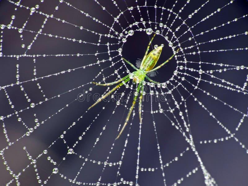 Паук поглощая других насекомых Приведенный дальше внутри! стоковое изображение