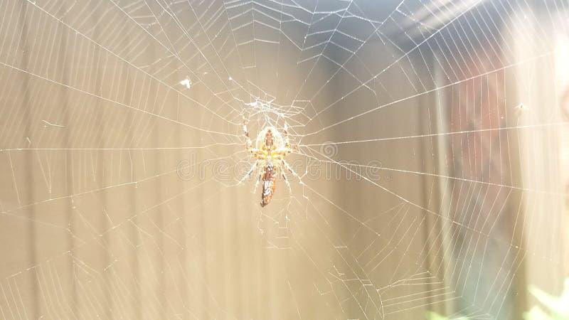 Паук, сеть в дожде стоковая фотография