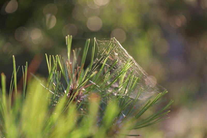 Паутина макроса в зеленой траве стоковая фотография rf