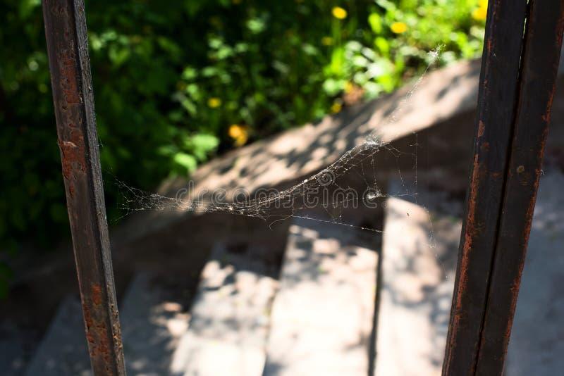 Паутина на загородке металла стоковая фотография
