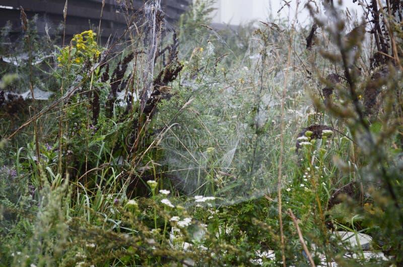 Паутина на траве стоковая фотография rf