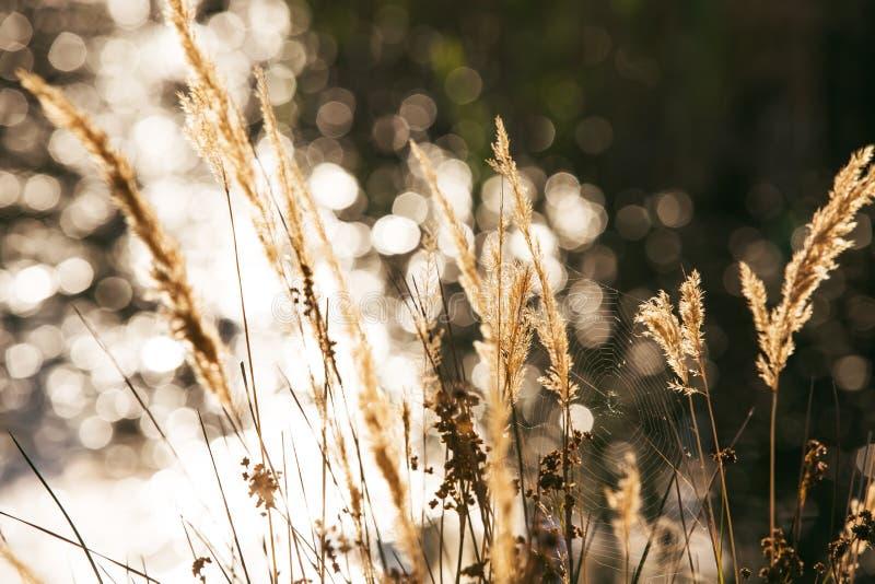 Паутина распространенная между травами стоковые изображения rf