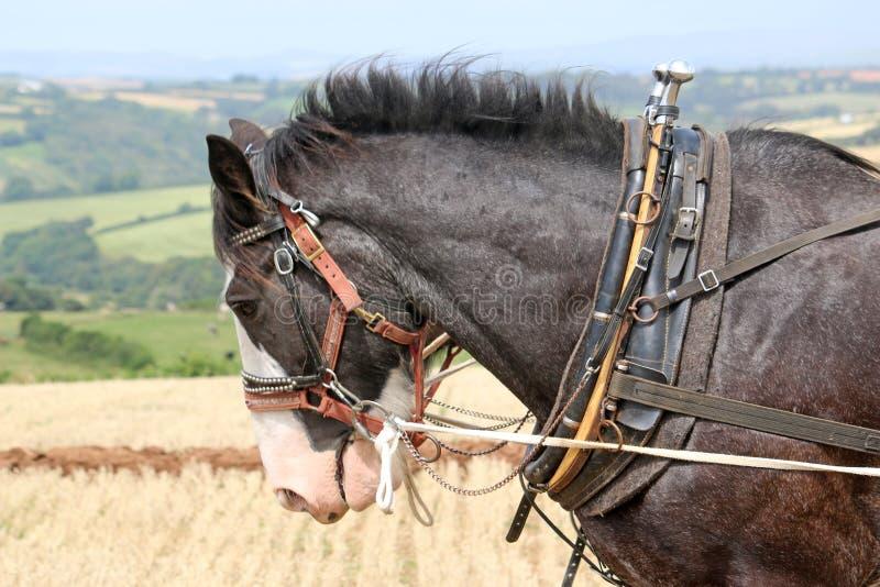 Пахать лошадей графства стоковое изображение rf