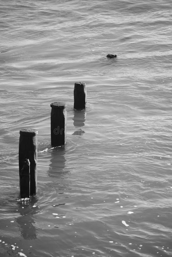 пахи в полной воде стоковое фото rf