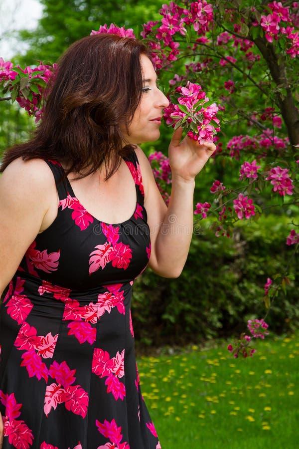 Пахнуть вишневый цвет стоковое изображение rf