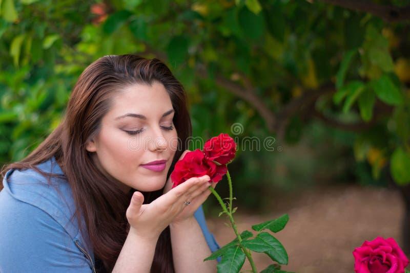пахнуть роз стоковые фото