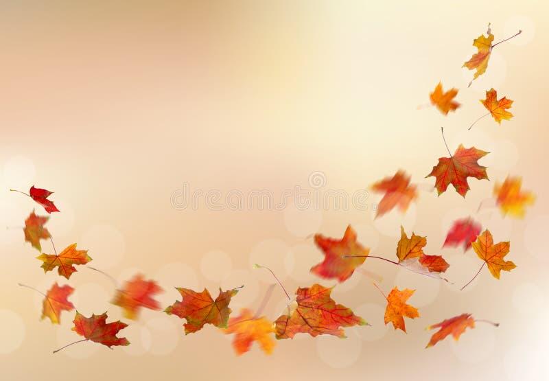 Падать листьев красного цвета осени иллюстрация вектора