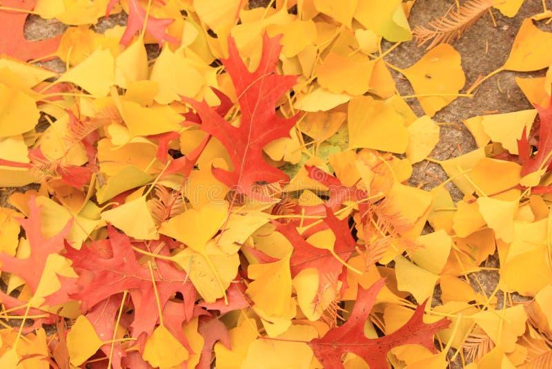 падая листья стоковое изображение