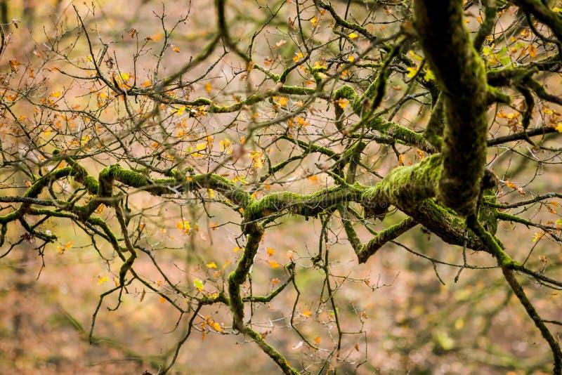 Падение выходит деревья на парк стоковые изображения
