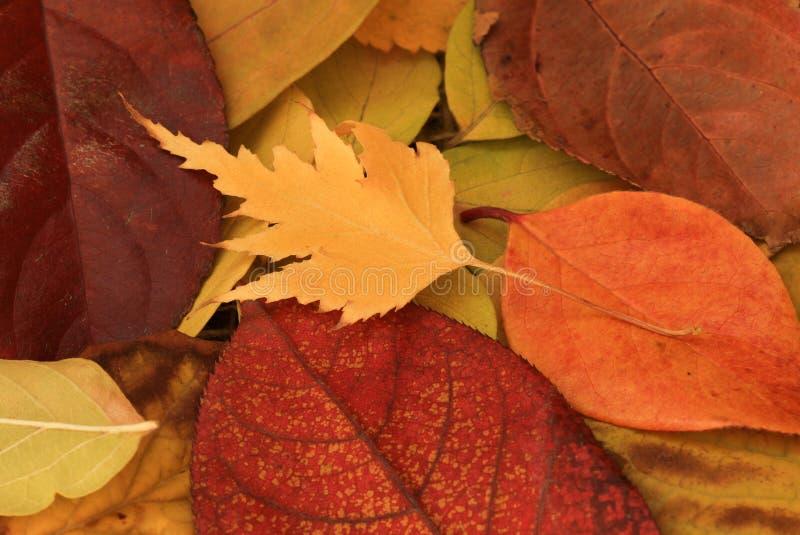 падение выходит естественная текстура живой стоковая фотография