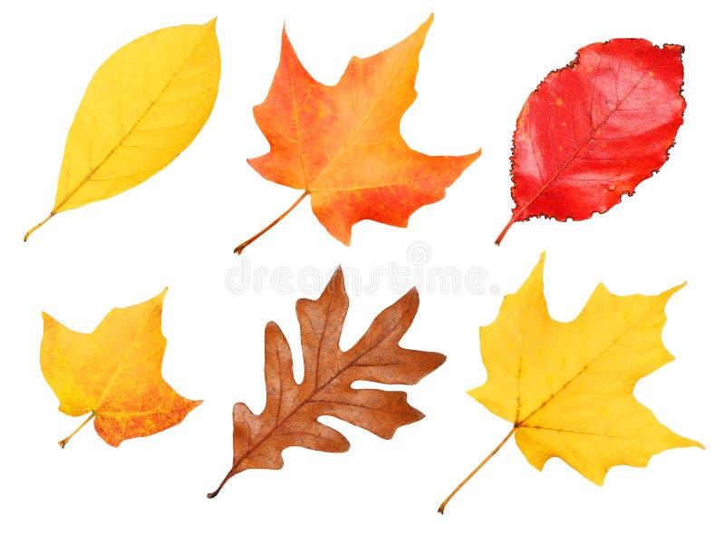 Падение выходит собрание изолированный Осень стоковое изображение rf