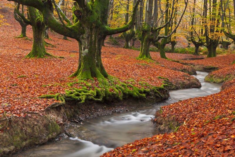 Падение в лес стоковые фотографии rf