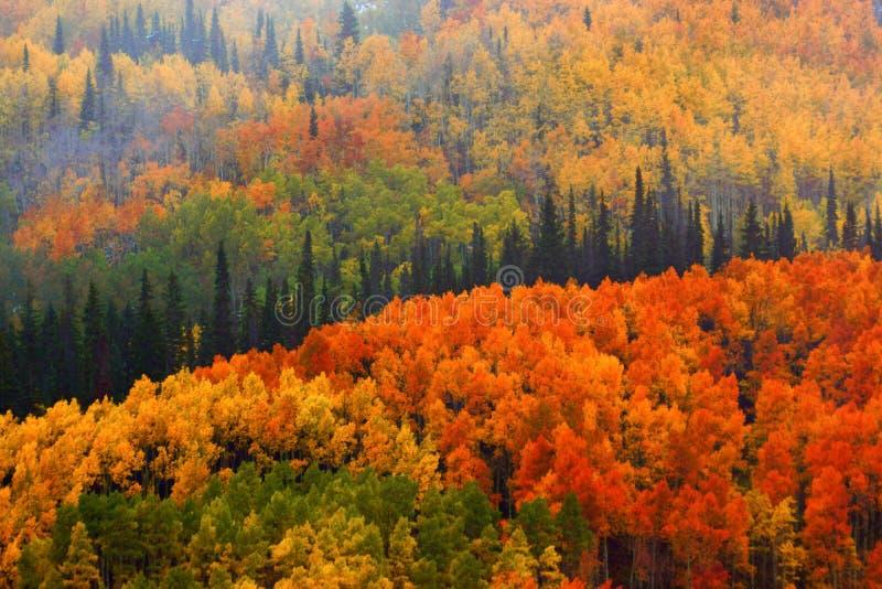 Падение в национальный лес Gunnison стоковые фотографии rf